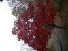Autumncolor_2
